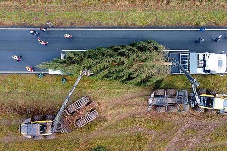 Der Weihnachtsbaum für das Bundeskanzleramt passt gerade so auf den Tieflader. Foto: Swen Pförtner/dpa