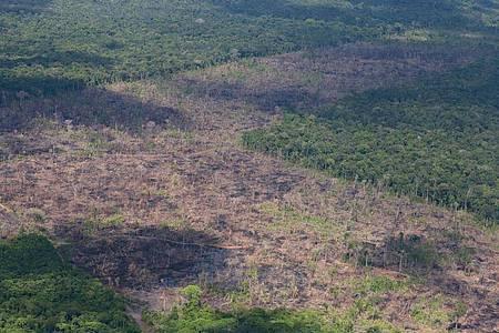 Luftblick auf abgeholzte Fläche des Amazonas. Die Zerstörung im brasilianischen Amazonas-Gebiet nimmt im Schatten der Covid-19-Pandemie dramatisch zu. Foto: Chico Batata/Greenpeace/dpa