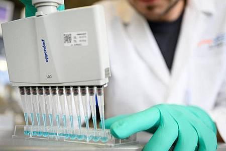 Impfstoff-Forschung im Labor eines pharmazeutischen Unternehmens. Foto: Sebastian Gollnow/dpa