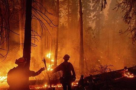 In ganz Kalifornien waren laut Feuerwehr zuletzt mehr als 14.800 Einsatzkräfte damit beschäftigt, 23 größere Brände einzudämmen. Foto: Noah Berger/FR34727 AP/dpa