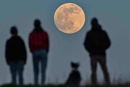"""Beim sogenannten """"Supermond"""" ist die Entfernung zwischen Mond und Erde geringer als sonst. Foto: Patrick Pleul/dpa-Zentralbild/dpa"""