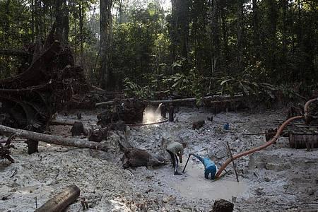Einem Bericht zufolge zerstört der illegale Abbau von Gold zunehmend Indigenen-Gebiete im Norden Brasiliens. Foto: Lucas Dumphreys/AP/dpa/Archiv