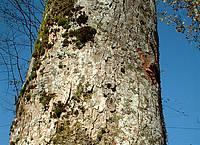 Symbolbild Baum