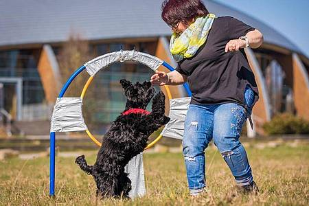 Jutta Gaßmann unternimmt mit ihrem Hund Gil der Rasse American Cocker Spaniel einen Weltrekordversuch im Reifensprung. Foto: Moritz Frankenberg/dpa
