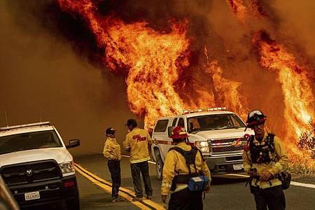 Feuerwehrleute versuchen das Feuer an der Butts Canyon Road im Lake County unter Kontrolle zu bringen. Foto: Noah Berger/AP/dpa
