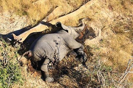 Toter Elefant in einem Gebüsch im Okavango-Delta. Im südafrikanischen Safari-Paradies Botsuana treibt ein mysteriöses Elefantensterben Tierschützer um. Foto: Uncredited/hons/AP/dpa