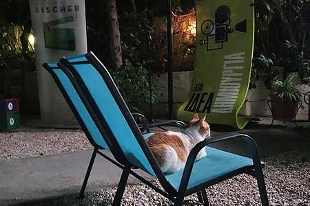Auch Katzen sind Filmfans. Foto: Vaiva Bauze/dpa