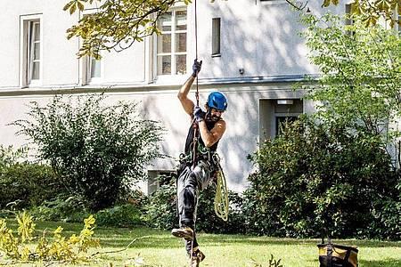 Ein geübter Baumkletterer braucht gerade einmal zehn Minuten, bis er eine 30 Meter hohe Baumkrone erklommen hat - inklusive Vorbereitung am Boden. Foto: Zacharie Scheurer/dpa-tmn
