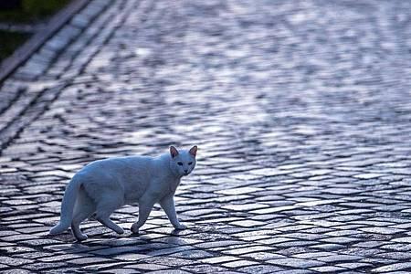 Katze mit Gefühlen: Die britische Regierung will das Land zum Vorreiter bei Tierrechten machen. (Symbolbild). Foto: Jens Büttner/dpa-Zentralbild/ZB