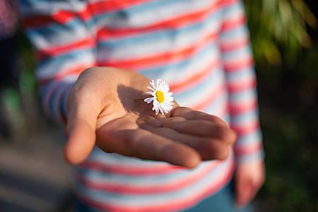 Kind hält Gänseblümchen - Aktion Lichtblicke