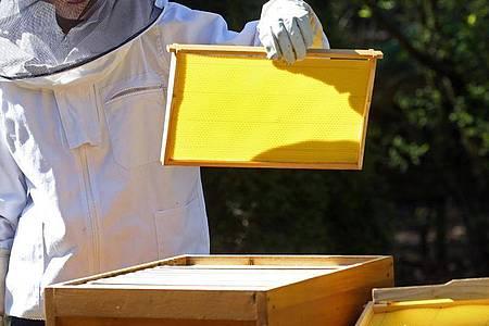 Imker können Einfluss auf die Kristallbildung des Honigs nehmen, in dem sie ihn vor dem Abfüllen kräftig rühren. Dadurch werden die Ecken und Kanten der Zuckermoleküle rund geschliffen. Sie können sich nicht mehr so gut verbinden. Foto: Wolfgang Kumm/dpa/dpa-tmn