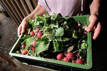 Wer das Klima schützen möchte, sollte viel Obst und Gemüse essen - am besten aus der Region und in Bioqualität. Foto: Sebastian Willnow/dpa-Zentralbild/dpa-tmn