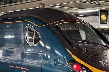 Eine Londoner Katze will als blinder Passagier nach Manchester. Foto: Network Rail/PA Media/dpa