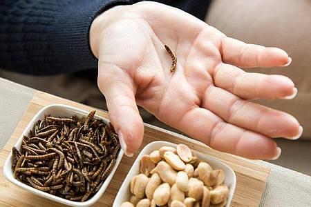 Ist der Mehlwurm ein leckerer Snack oder bedenklich? Verbraucher sollten bei insektenhaltigen Lebensmitteln lieber skeptisch sein. Foto: Christin Klose/dpa-tmn