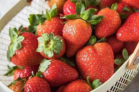 Erdbeeren für den Kuchen sollten möglichst erntefrisch sein. Länger als einen Tag im Kühlschrank aufbewahrt, verlieren die Früchte nicht nur an Vitamin C, sondern auch an Geschmack. Foto: Christin Klose/dpa-tmn