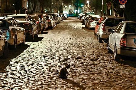 In aller Ruhe sitzt eine Katze kurz nach Beginn der Ausgangssperre auf einer Straße in Berlin-Karlshorst (Archiv). Foto: Jens Kalaene/dpa-Zentralbild/dpa