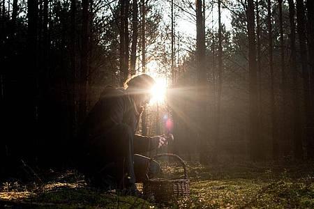 Bei der Pilzsuche im Wald sollten Sammlerinnen und Sammler stets genau hinschauen und verdorbene Exemplare am besten stehen lassen - auch, weil aus deren reifen Sporen neue Pilze wachsen. Foto: Klaus-Dietmar Gabbert/dpa-tmn