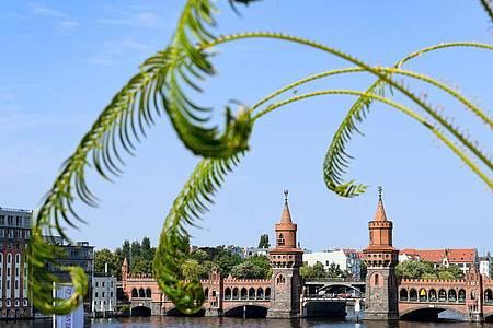Die Oberbaumbrücke verbindet Friedrichshain und Kreuzberg. Der Bezirk möchte keine Corona-Hilfe durch die Bundeswehr. Foto: Jens Kalaene/dpa-Zentralbild/ZB
