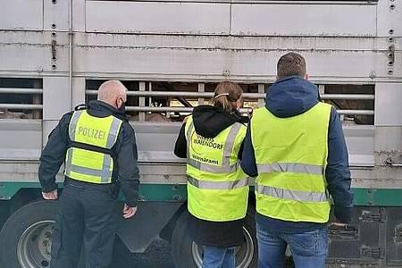 Kontrolle eines Tiertransports durch Kreis Warendorf, Veterinär amt und Polizei