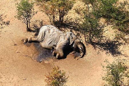 Der Tod ereilt die Tiere offenbar sehr schnell. Experten suchen nach Erklärungen. Foto: Uncredited/hons/AP/dpa