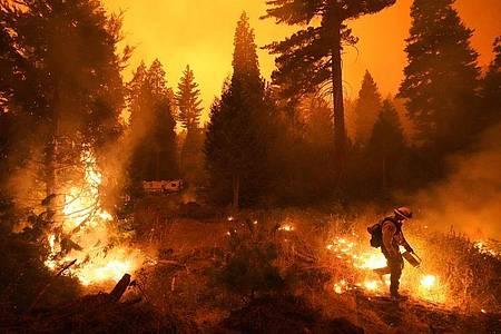 Ein Feuerwehrmann ist bei einem Waldbrand im Einsatz. Rasch um sich greifende Waldbrände haben Teile Kaliforniens in eine Feuerhölle verwandelt. Foto: Marcio Jose Sanchez/AP/dpa