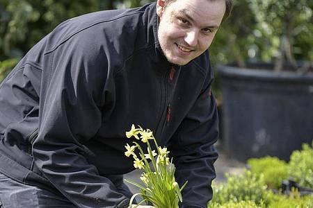 Hat ein Auge für stimmungsvolle Arrangements:Nico Hemsteg bepflanzt eine Schale mit Narzissen. Foto: Kirsten Neumann/dpa-tmn