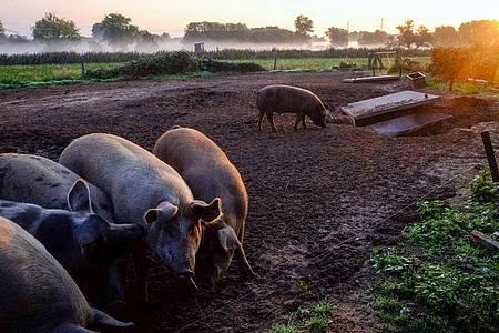 Wer sich klimafreundlich ernähren möchte, muss nicht gänzlich auf Fleisch verzichten. Es sollte aber möglichst von Tieren aus regionaler und artgerechter Haltung stammen. Foto: Stefan Jaitner/dpa/dpa-tmn