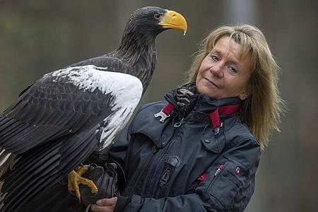 Der Riesenseeadler «Grobi» sitzt auf einem älteren Foto auf dem Arm der Inhaberin der Falknerei Bergisch Land in Remscheid, Carola Schossow. Foto: Tanja Brandt/Falknerei Bergisch Land/dpa