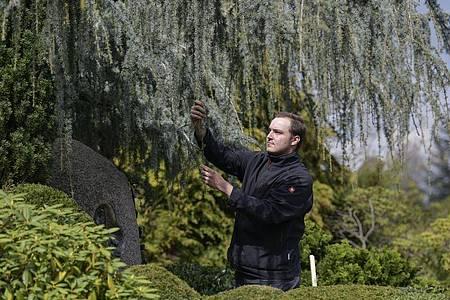 Ein Friedhof kann für viele eine Oase der Ruhe sein: Der angehende Friedhofsgärtner Nico Hemsteg sorgt dafür, dass dort alle Pflanzen und Bäume in bestem Zustand sind. Foto: Kirsten Neumann/dpa-tmn