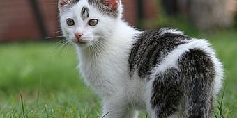 Schwarz-weiße Katze guckt sich um