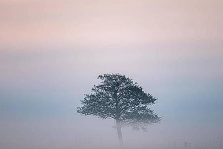 Ein Baum auf einer Wiese in Nordniedersachsen ist vom Nebel umgeben. Foto: Mohssen Assanimoghaddam/dpa