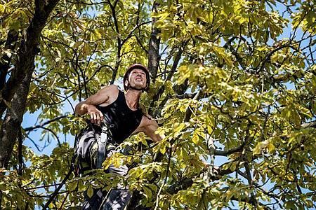 Baumpfleger kümmern sich um die Gesundheit und Sicherheit von Bäumen. Foto: Zacharie Scheurer/dpa-tmn