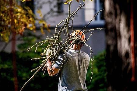 Wer ein verantwortungsvoller Baumpfleger sein möchte, hat neben einem Kletterkurs meist auch einen entsprechenden Lehrgang absolviert. Foto: Zacharie Scheurer/dpa-tmn