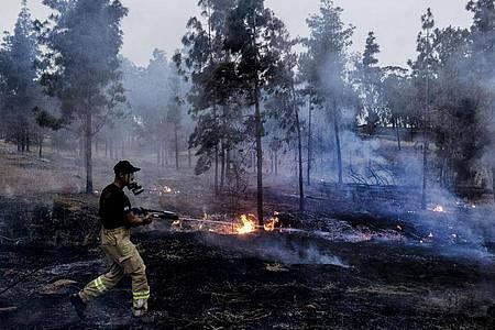 Ein israelischer Feuerwehrmann löscht ein Feuer in einem Waldgebiet, das durch einen aus dem Gazastreifen gestarteten Brandballon Feuer gefangen hatte. Foto: Tsafrir Abayov/AP/dpa