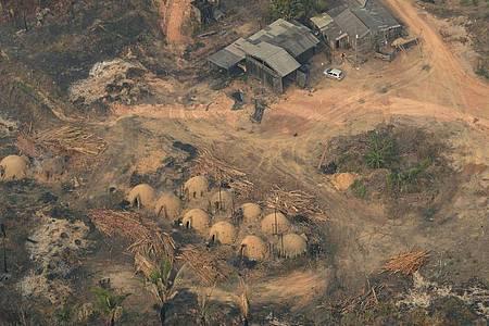 Die Abholzung des Regenwalds könnte die Verbreitung von Pandemien begünstigen. Foto: Eraldo Peres/AP/dpa
