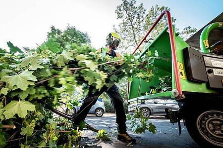 Schnittmaßnahmen planen, Kosten kalkulieren, Leistungen abrechnen: Zur Arbeit als Baumpfleger gehört auch die Abstimmung mit dem Auftraggeber. Foto: Zacharie Scheurer/dpa-tmn