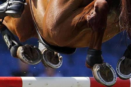 In Deutschland ist das erste Pferd nach einer Infektion mit einer neuen Herpes-Variante gestorben. Foto: Malte Christians/dpa