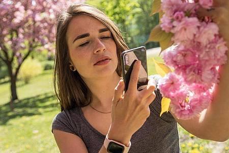 Wie heißt er gleich noch, der Baum? Mit dem Smartphone und der passenden App findet man es schnell heraus. Foto: Christin Klose/dpa-tmn