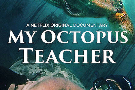 Filmplakat My Octopus Teacher