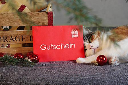 Katze liegt neben einem roten Gutschein aus der Gutschein-Box