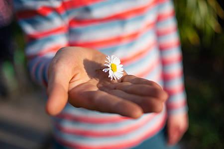 Kind hält Gänseblümchen auf der Hand