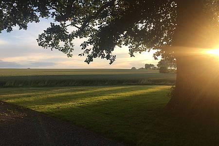 Baum auf Wiese bei Sonnenuntergang